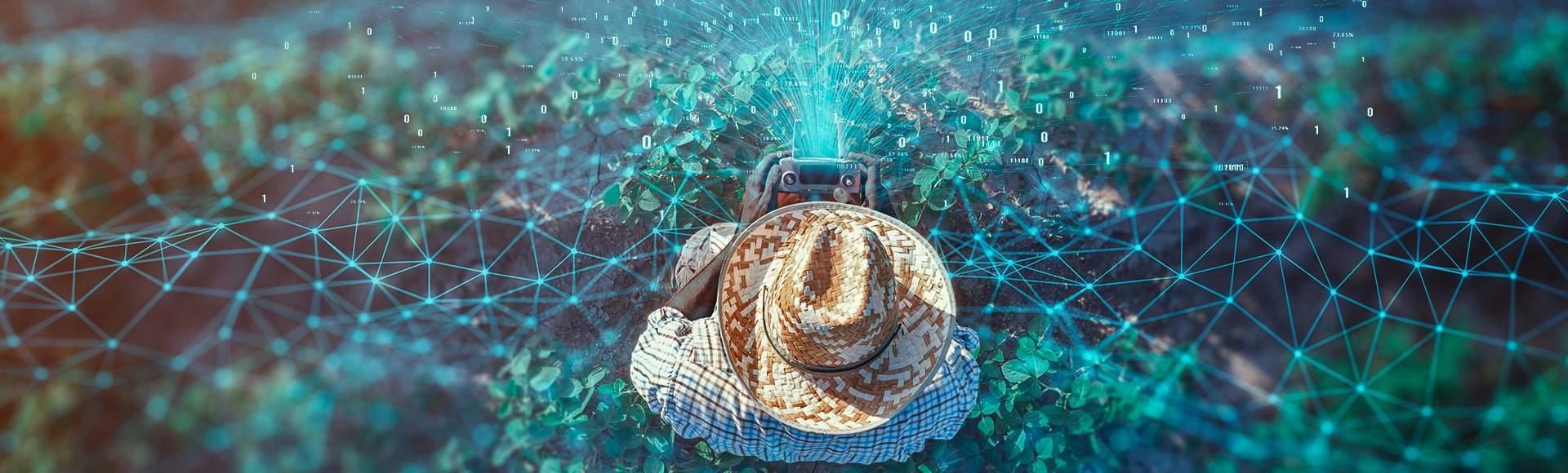 internet chega a zonas rurais
